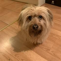 Found dog on 30 Nov 2019 in Collinswood, Collins Avenue, Dublin 9. Found. Female dog yellow colored. It was found in Collinswood, Dublin 9.