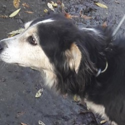Found dog on 30 Oct 2018 in Ronanstown. found, now in the dublin dog pound..Date Found: