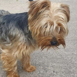 Reunited dog 31 Aug 2020 in kells. UPDATE REUNITED.....found...Meath Dog Shelter