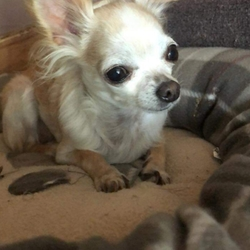 Lost dog on 01 Dec 2018 in Mayfield , Cork. ***Missing***