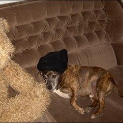 Reunited dog 02 Oct 2009 in swords, dublin. found him!
