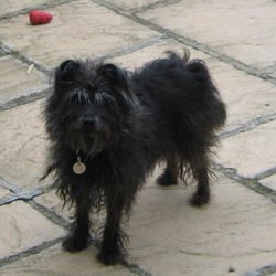 Lost dog on 03 Apr 2010 in Nobber, Co. Meath. Daisy went missing on Easter Saturday while we were staying on a Rathgillan Farm, Nobber, Co. Meath. She's a black long haired terrier mongrel with a grey muzzle and gery on the top of her head. She was wearing a pink collar with a tag with my number on it 086 8377884
