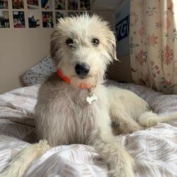 Reunited dog 03 Jul 2020 in Navan Rd. Found and reunited