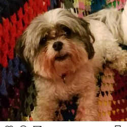 Lost dog on 03 Jun 2018 in Dublin 7. Miley lost from Navan Road area. Chipped but not registered. Very friendly. Contact 0876071774 or 0863053889