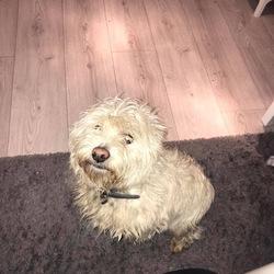 Reunited dog 05 Dec 2019 in Clonshaugh/Coolock Dublin 17. Update ** FOUND home safe