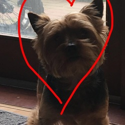 Lost dog on 05 Feb 2018 in Ballymun . Thank You for all help.Snoopy is Safety at home.