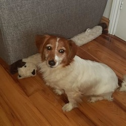 Lost dog on 05 Jun 2019 in crumlin. lost..DSPCA Lost & Found Pets