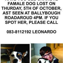 Lost dog on 05 Oct 2017 in Ballybough- Dublin 3. Have you seen Charlote