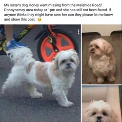 Lost dog on 06 Apr 2017 in Dublin 5. FOUND safe and sound thank you to the kind man that brought her home and everyone that looks for her