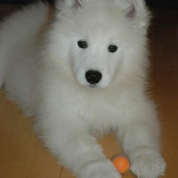 Lost dog on 06 Jan 2019 in Ballyshannon, Co.Donegal. Sammy - Ballyshannon, DONEGAL.