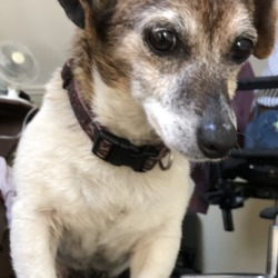 Reunited dog 06 May 2019 in Lixnaw, Co Kerry . ***Reunited with owners today! Thanks to all who shared***
