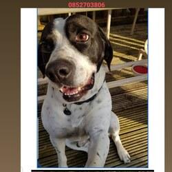 Reunited dog 07 Jul 2020 in kilkenny. Found and back home safe and sound!!!