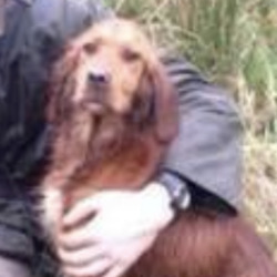 Lost dog on 07 Sep 2020 in leitrim. stolen,,,Trevor Knott