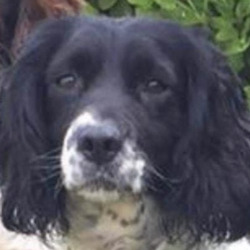 Lost dog on 08 Dec 2020 in lusk. lost...Lors lost dogs page