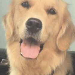 Lost dog on 08 Sep 2020 in Tipperary.. Lors lost dogs page