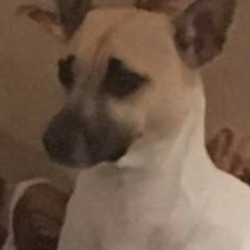Lost dog on 09 Jan 2019 in Blackhall little. . lost... Kilcloon Mulhussey Batterstown Moynalvey Notice Board