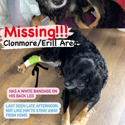 Lost dog on 09 Mar 0021 in Tipperary clonmore. Max is a nervous dog with a bandage on his left leg as he has been to the vet he has tanned paws and a white with brown mark on his chest