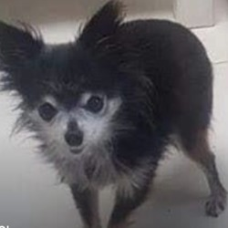 Lost dog on 09 Oct 2019 in dundrum. lost....Lors lost dogs page