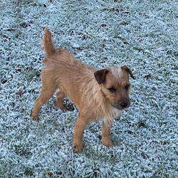 Lost dog on 10 Feb 2021 in Meath. Whiskey has been found, thank you all, we are thrilled to have her home.