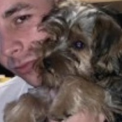 Lost dog on 10 Oct 2019 in limerick. LOST...Grieving family search for late Limerick man's missing dog after horror crash