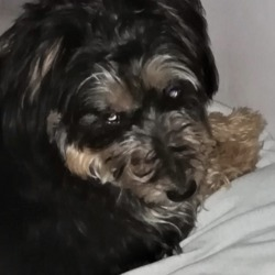 Lost dog on 10 Oct 2019 in Sandyford, . lost...DSPCA‎ to DSPCA Lost & Found Pets