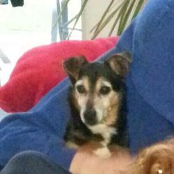 Lost dog on 11 Apr 2018 in Skryne Co. Meath. LUCAS