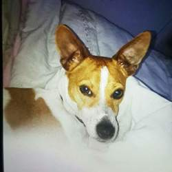 Lost dog on 11 Dec 2017 in Sandyford/ Stillorgan. Milly is a 3 year old female Jack Russell. She is micro chipped and neutered. She went missing in Sandyford industrial estate yesterday at 3pm. Last seen at St.Rapaelas school at around 4pm on Monday 11th December. Much loved family member. Reward offered