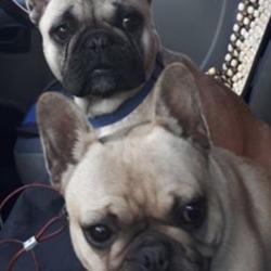Lost dog on 11 Dec 2019 in ireland. both stolen Henny and Penny.  from silgo  https://www.joe.ie/news/sligo-man-makes-appeal-two-dogs-stolen-van-688973?fbclid=IwAR122tTdWXvsI-EM44W44u1Mnd8lbuCn-xqwsd1XuFbm9quoddqPE4ulgxc