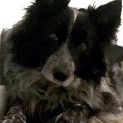 Reunited dog 11 Mar 2019 in lorcan ave d9. UPDATE REUNITED lost lorcan ave d9 missing dogs ireland