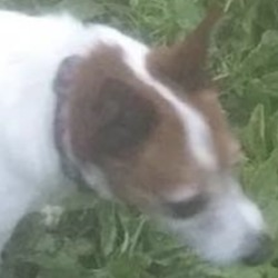 Lost dog on 12 Mar 2019 in Rathcoole and Clondalkin.. lost...K.W.W.S.P.C.A.