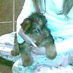 Lost dog on 13 Dec 2009 in Tallaght. Male Yorkshire Terrier Pup. Lost in Brookfield area of Tallaght. Answers To Rocky Four Months Old Not Wearing His Collar Missing Since 12th Dec 09 If Found Please Contact Tina @ 0871363111 - - 7 Year Old Owner Devastated
