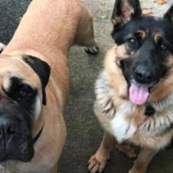 Reunited dog 13 Dec 2018 in Ross Tara area Co Meath.. UPDATE REUNITED....lost...MDS Lost & Found Pets
