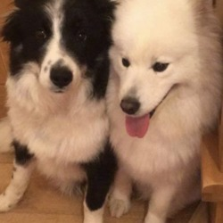 Lost dog on 13 Feb 2019 in  co tyrone. lost...Lors lost dogs page
