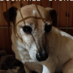 Lost dog on 13 Nov 2020 in stoneybatter. FOUND,...Pride of Place Stoneybatter