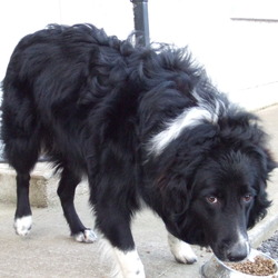 Found dog on 15 Dec 2009 in Emo, Laois. Collie/ Sheepdog mix. Male. Very friendly. Long haired. Found in Emo, Co Laois. Around 1 yr old. Please phone me at 087 7976916