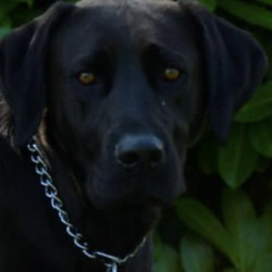 Lost dog on 15 Jan 2020 in Scarnagh,Inch . lost...Let's Get Shadow Home