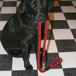 Lost dog on 15 Nov 2009 in Cork. Body Found  Jessie, our beautiful black labrador went over the weir at the regional park, ballincollig, Cork.
