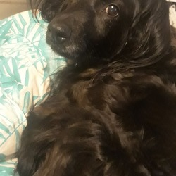 Lost dog on 15 Oct 2019 in Dublin 5 artane . Hi, We live in artane,dublin 5, maypark and thorndale area. Our dog obie slipped off while the front door was open today. Shes a black collie with a pink collar. We've checked around places she knows such as the local parks and we havent seen any sign of her. If you're in the artane-Dublin 5 area and you've seen or are holding onto her please let us now thanks .