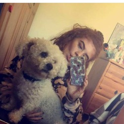Lost dog on 16 Dec 2017 in Dublin 5, Raheny . Nando, Bichon Frise, microchipped, wearing black colour. Went missing from Raheny D. 5, kilbarrack area. If found call myself, Georgia on 0877785968