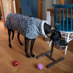 Reunited dog 16 Feb 2020 in Tallaght, Dublin, Ireland. ** Romeo has been found by owner, safe and sound  Romeo is a back greyhound with a blue and grey coat. He got loose in Tymon Park, Dublin running towards Greenhills Road. He has number on collar and is chipped.