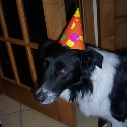 Lost dog on 16 Mar 2010 in Mayo. We lost our dog woody, on the 16th of March in the Cong area of mayo. He's a border collie. With a black and white coat, white on his collar, paws and the tip of his tail. He's about 1 and a half and very friendly.