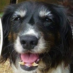 Lost dog on 16 Nov 2018 in galway... REPOSTING IN THE HOPE THEY WILL BE REUNITED,...PLEASE SHARE Two senior dogs are missing from Moycullen area Co Galway since Sat Jul 21st, 2018 Both microchipped, neutered, about ten years old. Both female cocker spaniels. The black dog has a sore front leg and is possibly being looked after by the brown one, They've been together since birth. If you have information please contact 0871932871 missingcockerspanielgirl2@gmail.com Yours sincerely Dog owners John and Lucy