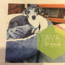 Lost dog on 16 Oct 2017 in Sun City Center, FL. 10# Grey and White Italian Greyhound.  Lost 10/13/17 Sun City Center,FL.  Please do not approach her just sit with scented food like tuna nearby and wait for her to come to you.  WEARING TURQUOISE COLLAR AND DRAGGING BLACK LEASH