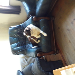 Lost dog on 17 Apr 2019 in Knocknaree co.waterford . Pointer x springer spaniel female nearly 8 years old vaccinated microchipped and neutered.