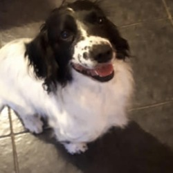 Reunited dog 17 Feb 2019 in Blanchardstown. UPDATE REUNITED....lost...to lost & found pets blanchardtown 🐶🐱