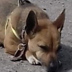 Lost dog on 17 Jan 2020 in grannagh, kilmacow, . Lors lost dogs page