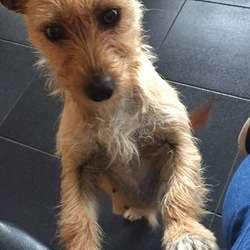 Lost dog on 17 Sep 2018 in Ballyglass, Mayo. Lost female terrier, 2 years old. Has been missing from the ballyglass area (co. Mayo) since storm Ali, have tried other media platforms but nothing. Please if anyone has found her, please get in contact!