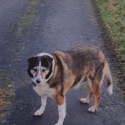 Lost dog on 18 Feb 2021 in North Galway.