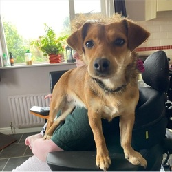 Reunited dog 18 Jun 2021 in Crookedwood / Drumcree / Collinstown / Delvin. Dog has been found and reunited with owner.  Thank you x