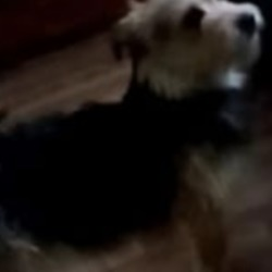 Lost dog on 18 Mar 2020 in Jobstown, Tallaght. lost...Lost Dogs Dublin